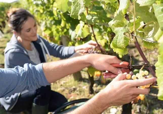 sezonski-poslovi-u-poljoprivredi.jpg
